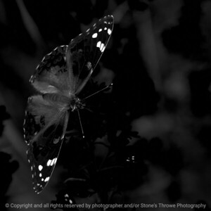 015-butterfly-wdsm-05sep17-09x09-006-1390