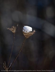 015-botanical_snow-wdsm-10jan09-cvr-1150