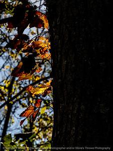 015-leaves_autumn-wdsm-07oct14-09x12-0033