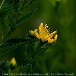 015-flower-wdsm-30jun16-09x09-006-2630