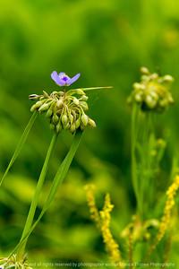 015-flower-wdsm-26jun19-06x09-009-500-1313