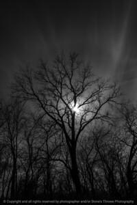 015-silhouette_tree-wdsm-27feb21-08x12-008-400-bw-9213