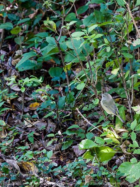 015-bird-wdsm-07oct14-09x12-0035