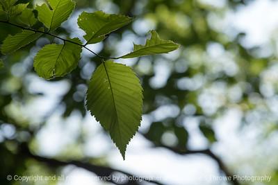 015-leaf-wdsm-09jul16-18x12-003-4721