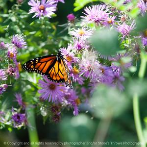 butterfly-wdsm-27sep15-09x09-006-5312