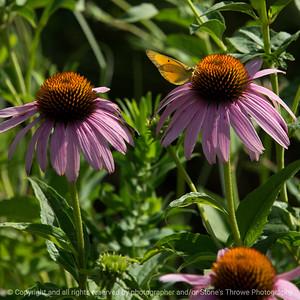 015-butterfly-wdsm-14jul16-09x09-006-4838