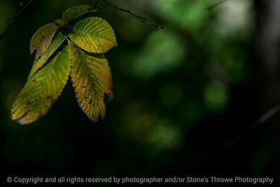 leaves_autumn-wdsm-27sep15-18x12-003-5352