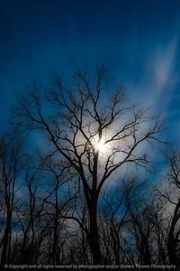 015-silhouette_tree-wdsm-27feb21-08x12-208-400-9212