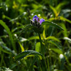 015-flower-wdsm-17may16-09x12-001-9117