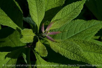015-botanical-wdsm-18may16-18x12-003-9155
