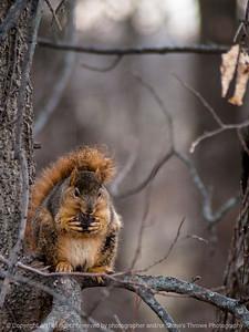 015-squirrel-wdsm-29nov14-09x12-001-0914