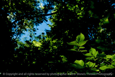 015-leaves-wdsm-14jul17-12x08-007-0224