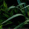 015-grass-wdsm-17may16-09x09-006-9092
