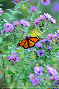 015-butterfly-wdsm-19sep08-0300