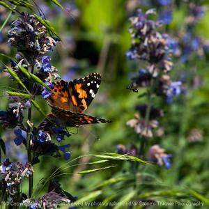 015-butterfly_bug-wdsm-06jun17-12x12-006-3132