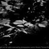 015-leaf-wdsm-03jun10-lcvr-bw-3636