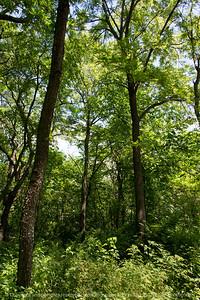 015-forest_view-wdsm-19jun17-12x18-004-9595