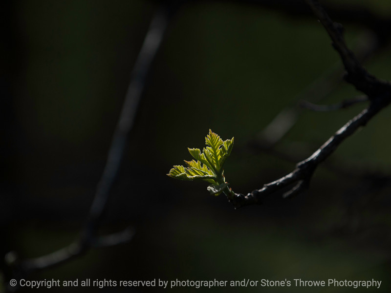 015-leaves-wdsm-25apr16-12x09-002-8166