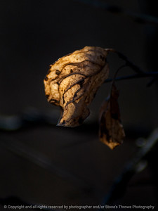 015-leaf_winter-wdsm-30jan15-09x12-001-1646