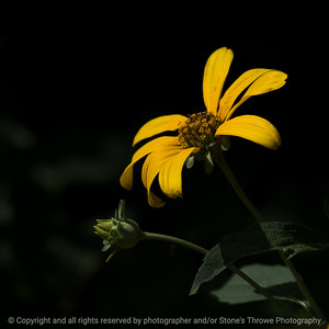 015-flower-wdsm-03aug18-09x09-006-300-6354