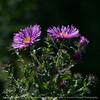 flower-wdsm-23aug15-09x09-006-4513