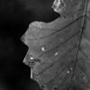 015-leaf_autumn-wdsm-18oct08-c1-cvr-bw-0675