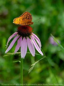 015-butterfly-wdsm-14jun18-09x12-001-300-5497