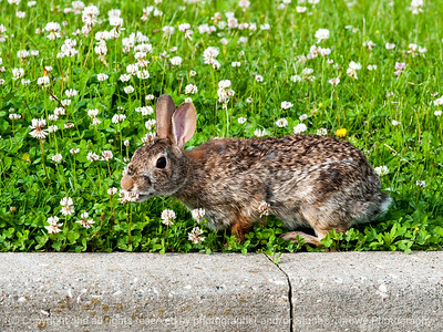 rabbit-wdsm-29may15-12x09-002-3513