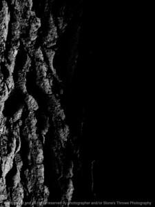 015-tree_bark-wdsm-17may16-09x12-001-bw-9081