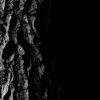 015-tree_bark-wdsm-17may16-09x12-001-bw-9081