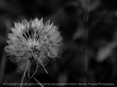 015-botanical-wdsm-13jun10-4321