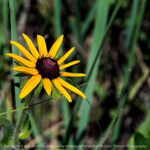 015-wildflower-wdsm-19jun17-12x12-006-9617