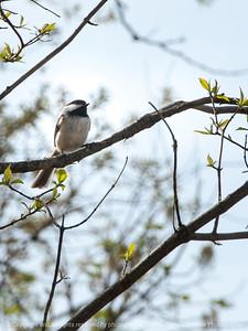 bird-wdsm-16apr15-09x12-001-2570