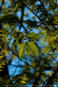 015-leaf-wdsm-09may17-12x18-004-2865