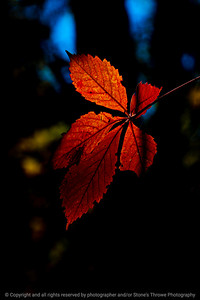 015-leaves_autumn-wdsm-07oct20-08x12-008-400-8513