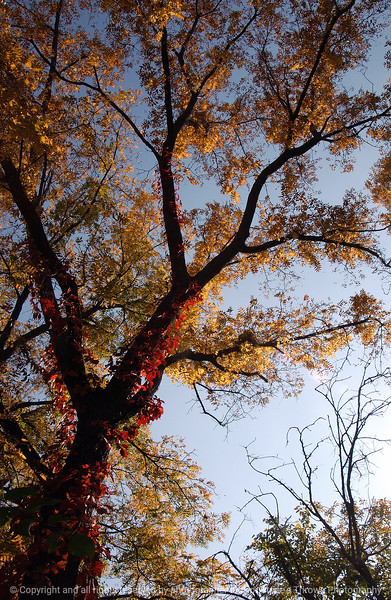 015-autumn_tree-wdsm-08oct03-b