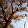 015-autumn_tree-wdsm-08oct03-b