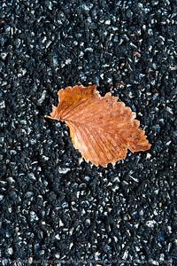 015-leaf-wdsm-02nov18-06x09-209-500-8717