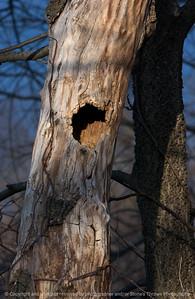 015-hollow_tree_sunset-wdsm-30mar09-3676 titled - hollow tree sunset 2