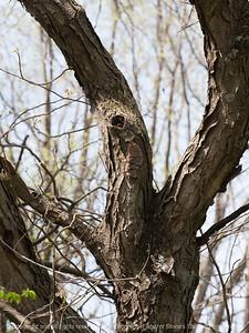 015-tree_detail-wdsm-26apr16-09x12-001-8222