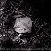 015-leaf-wdsm-08sep17-12x08-007-bw-1521