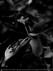 015-botanical-wdsm-22may16-09x12-001-bw-9225