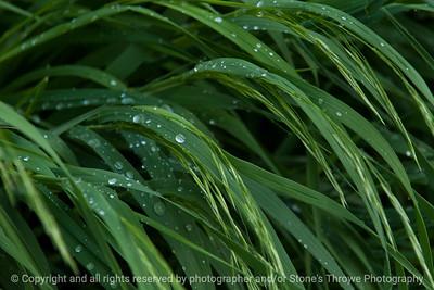 015-grass_dew-wdsm-17may17-18x12-003-2976