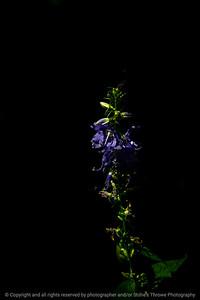 015-flower-wdsm-17jul20-08x12-008-400-7341
