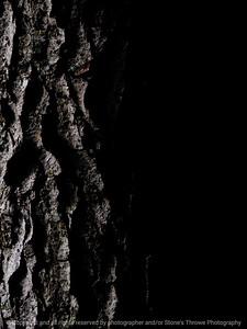 015-tree_bark-wdsm-17may16-09x12-001-9081
