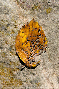 015-leaf_autumn-wdsm-16oct17-08x12-007-2273