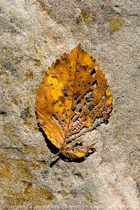 015-leaf_autumn-wdsm-16oct17-08x12-007-2273