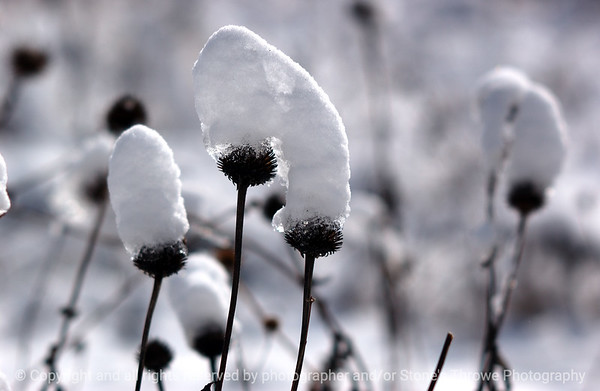 015-winterscape-wdsm-26feb07-0183