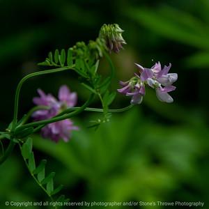 015-flower-wdsm-14jun18-09x09-006-300-5467