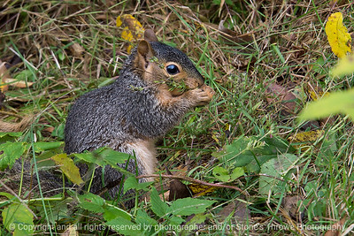 015-squirrel-wdsm-08oct18-12x08-008-300-8117